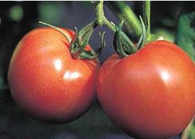 img_tomato